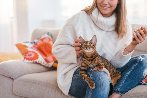 Cómo enseñar al gato a no arañar los sillones
