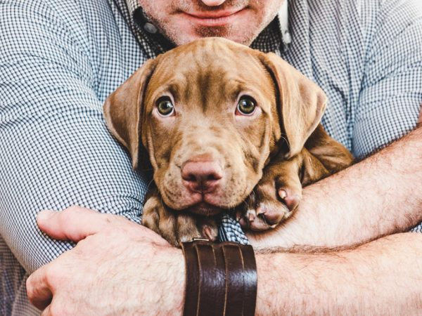 Adoptar un perro claves requisitos consejos a tener en cuenta gastos