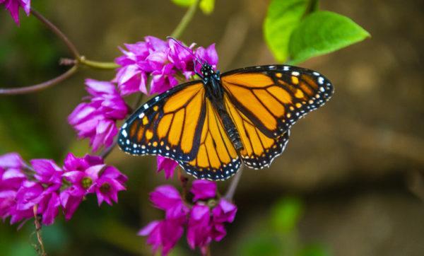 Los animales de africa mariposa