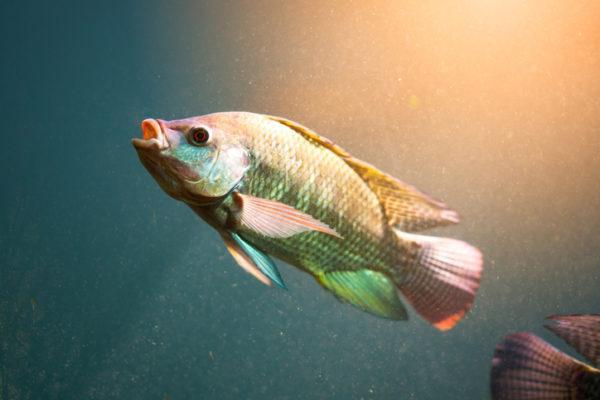 Los animales de africa peces