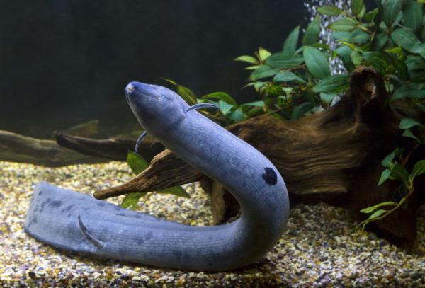 Los animales de africa pez