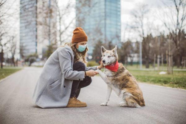 Por qué los perros y gatos no pueden contagiar el coronavirus