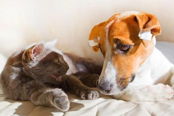 Como afecta la cuarentena a mascotas
