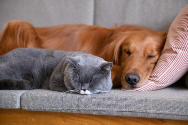 Como afecta la cuarentena las mascotas