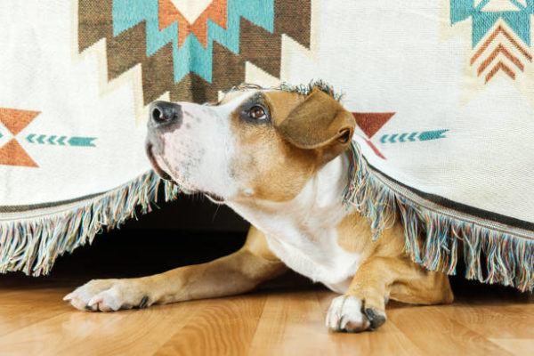 Como saber si mi perro tiene ansiedad sintomas causas tratamientos