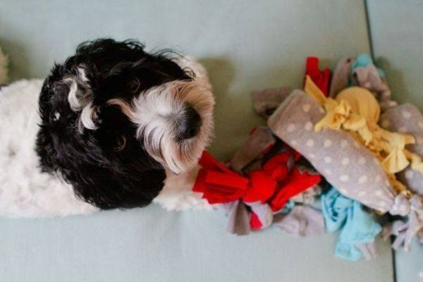 como-celebrar-dia-del-perro-juguete-de-ropa-vieja-la-nubes-de-algodon