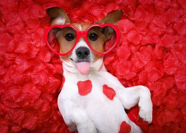 como-celebrar-dia-del-perro-perro-petalos-istock
