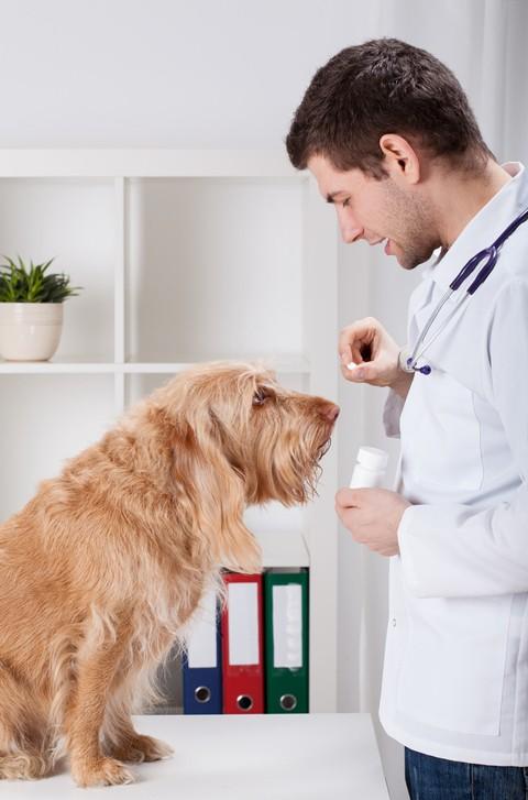 Como hacer perro trague pastilla